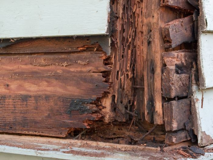 termite damaged wood in a rixeyville crawl space